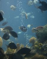 Cómo tener Sal peces en los tanques pescado Agua salada
