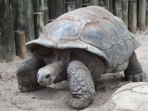 Lo Climático Do Tierra tortugas viven?