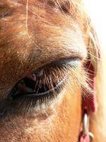 Los síntomas de los problemas comunes de la vista en Morgan Caballos