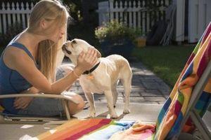 Cómo curar la respiración del perrito