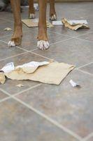 Cómo mantener a los perros fuera de mi cubo de la basura