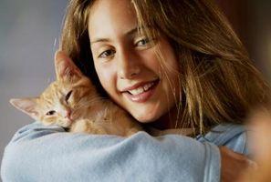 Cómo introducir un gatito macho a una casa que ya tiene un gato masculino