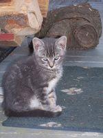 Cómo obtener la orina del gato Fuera de Pisos de Concreto
