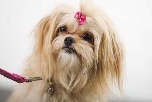 Cómo decorar una correa de perro de cuero