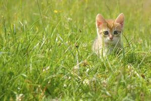 Cómo usar Benadryl para las alergias de gato