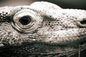 Las adaptaciones de los reptiles
