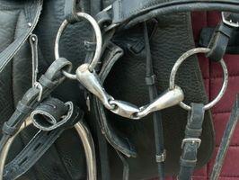 La colocación correcta de un filete Bit en boca de un caballo