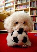 El síndrome vestibular periférica en perros