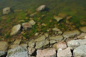 ¿Qué causa que las algas crezcan más rápido?