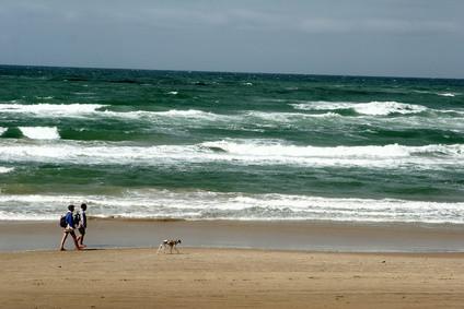 Pet Friendly Beach Condos en Florida