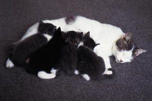 Bebé son los gatos que nacen con los ojos abiertos?