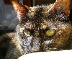 Cómo entender Lengua cat