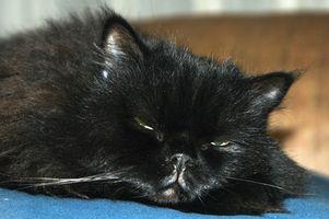 Efectos secundarios de la buprenorfina en los gatos