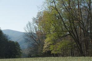 Cabañas en Greenville, Tennessee