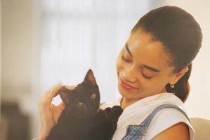 Cómo detener a un gato de Licking