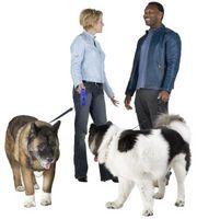 Cómo averiguar cuál de los dos perros alfa es el más dominante?