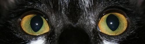 Anatomía del ojo del perro y del gato