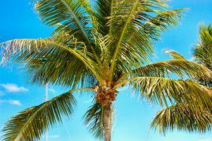 Hoteles baratos en Islamorada, Florida