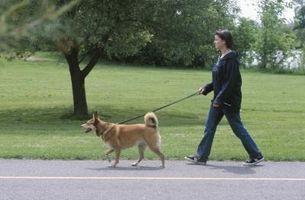 La pata del perro Irritación De Concreto