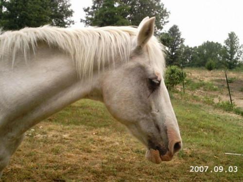 ¿Cuáles son los tratamientos para la sarna del caballo?