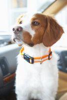Cómo hacer un collar de perro Con elástico Tela