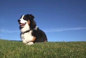 Se aceptan mascotas Casas zona de St. Cloud, Florida