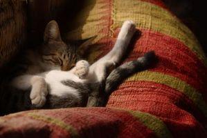 ¿Qué significa cuando un gato Espasmos en su sueño?