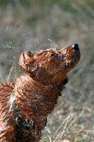 Los aplicadores de champú para perros