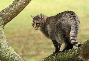 Los suplementos de potasio para gatos