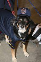 Canine Subvenciones de policía