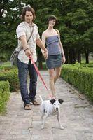 ¿Cómo puedo enseñar a mi perro a Avísame cuando se quiere salir?