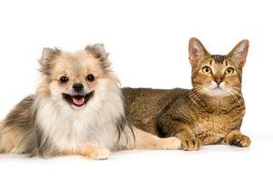 Los nemátodos o tenias en Perros y Gatos