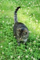 ¿Cuáles son los efectos secundarios de Benadryl en los gatos?