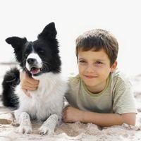 Puede Conseguir una ayuda para mascotas duelo los niños?
