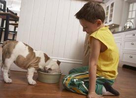 Datos sobre el sistema digestivo del perro
