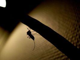 Cómo matar larvas de mosquitos con productos del hogar