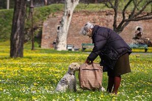 ¿Cuáles son las causas de las convulsiones en un perro de edad avanzada?