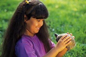 Datos de tortuga de caja para Niños