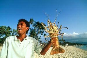 Cómo alimentar langosta de agua dulce australiano