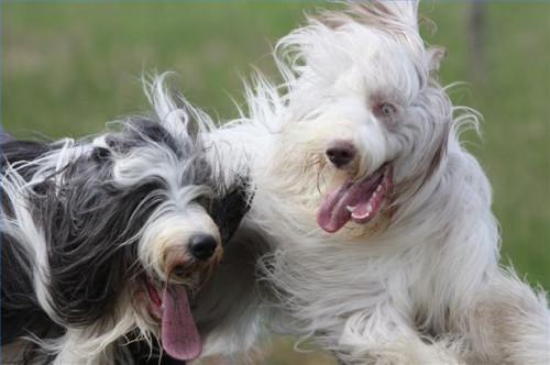 Como implantar admiten para Mayores Mascotas en el Hogar