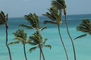 Vacaciones Gay Aruba