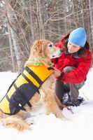 Neopreno chalecos y sus usos para perros