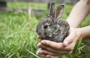 Antiparasitarios utilizarse en conejos