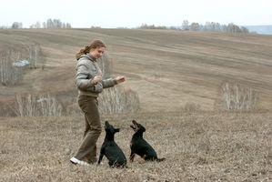 Las clases para los perros Servicio de Formación