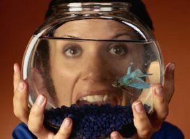 Lo insectos pueden comer los pescados de Betta?