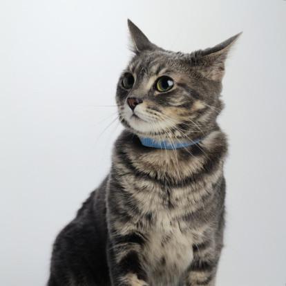 Seguimiento de los collares para gatos