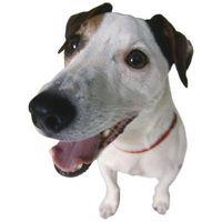Cómo enseñar a su perro a usar una puerta para perros