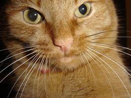 La información sobre las barbas del gato