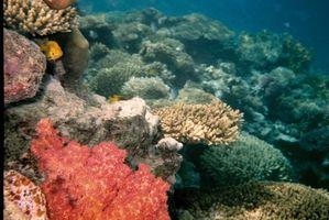 Descripción de los arrecifes de coral