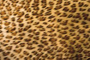 ¿Cómo hacer arte en las uñas del guepardo en el Hogar